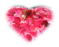Beautiful heart of red rose petals isolated on white background Royalty Free Stock Photo