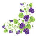 Beautiful heartsease . vector illustration of a realistic