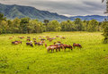 Beautiful herd of horses graze before smokey mountains in tennessee spring Stock Image