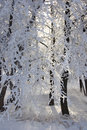 Beautiful hoarfrost Royalty Free Stock Photography