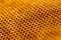 Beautiful honeycomb without honey texture Royalty Free Stock Photo