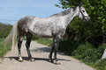 Beautiful horse with bridle standing on the road grey Stock Photo