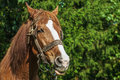 Beautiful horse closeup amid green forest Stock Image