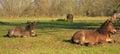 Beautiful horses on a field Royalty Free Stock Photo