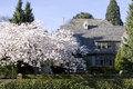 Beautiful house with cherry blossom front yard Stock Photography