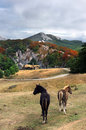 Beautiful house in the mountain with horses landscape and a Royalty Free Stock Photos