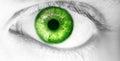 Beautiful human eye, macro, close up  blue, yellow, brown, green Royalty Free Stock Photo