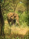 Beautiful images of an african elephant in kenya Royalty Free Stock Photo