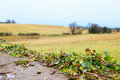 Beautiful irish autumnal landscape fields scenery in Co.Cork, Ireland. Stock Photo