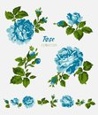 Beautiful isolated blue flowers on the white background. Set of different floral design elements Royalty Free Stock Photo