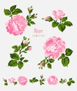 Beautiful isolated pink flowers on the white background. Set of different floral design elements Royalty Free Stock Photo