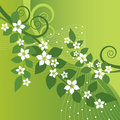 Beautiful jasmine flowers and green swirls on gree background this image is an illustration Royalty Free Stock Photos