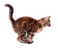 Beautiful kitten running cute isolated on white background Royalty Free Stock Photo