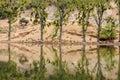 stock image of  Beautiful lake in Morocco it called wiwan