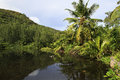 Beautiful lake with palm trees near the le chevalier bay guesthouse praslin island in seychelles Stock Photography