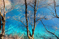 Beautiful lake with tree in jiuzhaigou reputed as a fairyland located county of aba tibetan and qiang nationality autonomous Stock Photo