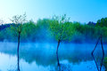 Beautiful lake view in morning fog with mystic trees as leftovers of a mole in blue tones. Royalty Free Stock Photo