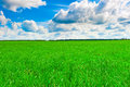 Beautiful landscape. Cumulus clouds and green grass Royalty Free Stock Images