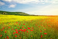 Beautiful landscape field in crimea Royalty Free Stock Photo