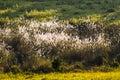 Beautiful landscape field of grass Royalty Free Stock Photo