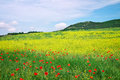 Beautiful landscape with flowers spring flower meadow Royalty Free Stock Images