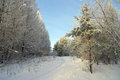 Beautiful landscape in forest winter Stock Images