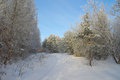 Beautiful landscape in forest winter Royalty Free Stock Photo
