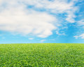 Beautiful landscape with fresh green meadow cloud and blue sky background Stock Photos