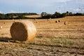Beautiful landscape of golden fields Germany