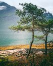 Beautiful landscape, pine trees on the fjord in Norway, travel to Scandinavia Royalty Free Stock Photo