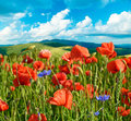 Beautiful landscape of poppies and wildflowers on a background o mountains cloudy sky natural Stock Photography