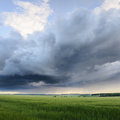 Beautiful landscape. Rain clouds over green wheat field Royalty Free Stock Photo