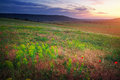 Beautiful landscape sunset in crimea field Royalty Free Stock Images