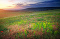 Beautiful landscape sunset in crimea field Stock Image