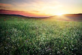 Beautiful landscape with sunset sky and field composition of nature Royalty Free Stock Photography
