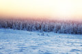 Beautiful landscape of sunset in winter forest Royalty Free Stock Photo