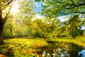 Beautiful landscape with trees, pond and bright sun Royalty Free Stock Photo