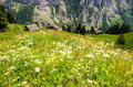 Beautiful Landscape view of Charming Murren Mountain Village with Lauterbrunnen Valley and Swiss Alps, Jungfrau region Royalty Free Stock Photo