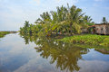 Beautiful landscape view near the river with water reflection on coconut tree Royalty Free Stock Photo