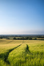 Beautiful landscape wheat field in bright summer sunlight evenin evening Royalty Free Stock Image