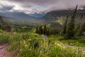 Beautiful landscape and wide flower in Glacier national park Royalty Free Stock Photography