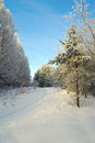 Beautiful landscape in winter forest Stock Image