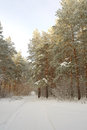 Beautiful landscape in winter forest Royalty Free Stock Image