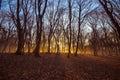Beautiful landscape of winter forest at Sunset time. Sun light in the misty dead autumn forest. Azerbaijan Gabala Ismailli. Topchu