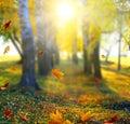 Beautiful Landscape With Yello...