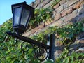 Beautiful lantern on brick wall with green ivy leaves Royalty Free Stock Photo