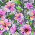 Beautiful lavatera flowers with green leaves against gray background. Seamless floral pattern. Watercolor painting.