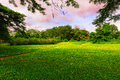Beautiful lawn under the color clouds below Royalty Free Stock Image