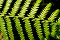 Beautiful leaf of fern is close-up background Royalty Free Stock Photo