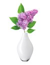 Beautiful lilac branch in vase isolated on white background Royalty Free Stock Photos